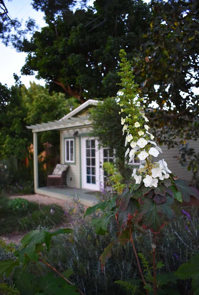 Colorful Eco Friendly Art Studio Garden in California - Drought Tolerant